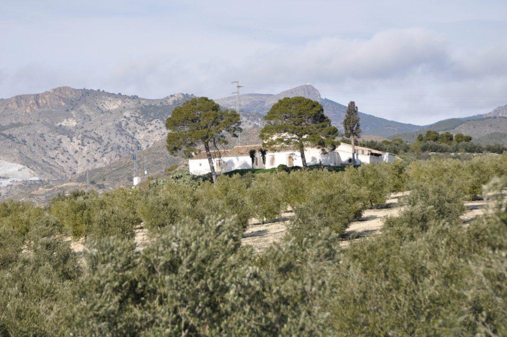 Vista general desde la carretera del cortijo el Seco, hoy poblado de olivos. (Foto de Baldo Oliver)